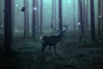 Create a Dark, Emotional Deer Photo Manipulation in Photoshop